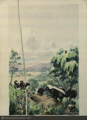 http://lbry-web-002.amnh.org/san/mo_exhibition/art003_b2_17.jpg