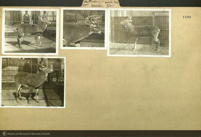http://lbry-web-002.amnh.org/san/mo_exhibition/ppc_532_b11_f123_003.jpg