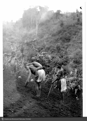 http://lbry-web-002.amnh.org/san/to_upload/Beck-PapuaNewGuinea/NG-5x7-prints/115720.jpg