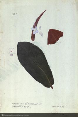 http://lbry-web-002.amnh.org/san/mo_exhibition/art002_b1_46.jpg