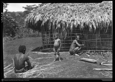 http://lbry-web-002.amnh.org/san/to_upload/Beck-PapuaNewGuinea/NG-5x7-negs/115552.jpg