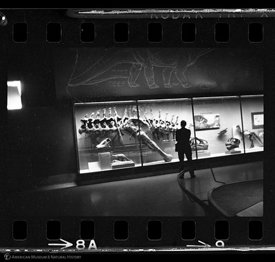 http://lbry-web-002.amnh.org/san/to_upload/35mm_halls_new/602863_08a.jpg