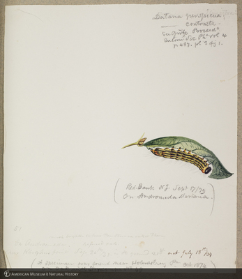 http://lbry-web-002.amnh.org/san/to_upload/titianbutterflies/b1179161_125.jpg