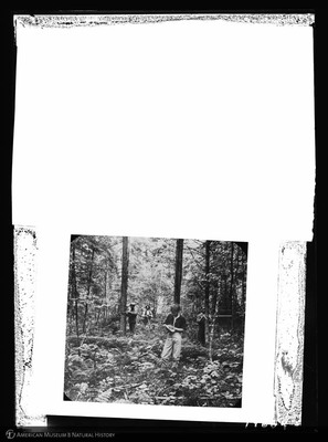 http://lbry-web-002.amnh.org/san/to_upload/5x7/19664.jpg
