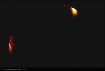 http://lbry-web-002.amnh.org/san/35mm/K1769.jpg