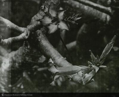 http://lbry-web-002.amnh.org/san/mo_exhibition/ppc_533_b12_f267_009.jpg