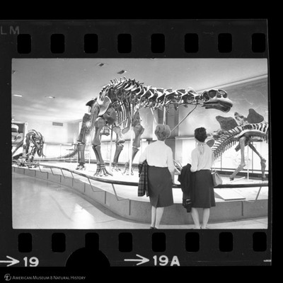 http://lbry-web-002.amnh.org/san/to_upload/35mm_halls_new/600175_19a.jpg
