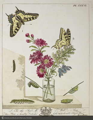 http://lbry-web-002.amnh.org/san/naturalhistories/b10836809.jpg