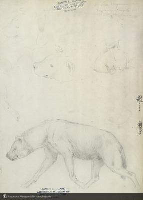 http://lbry-web-002.amnh.org/san/mo_exhibition/art001_b4_11.jpg