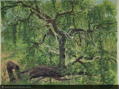 http://lbry-web-002.amnh.org/san/palais-de-tokyo-loan-paintings/100101661.jpg