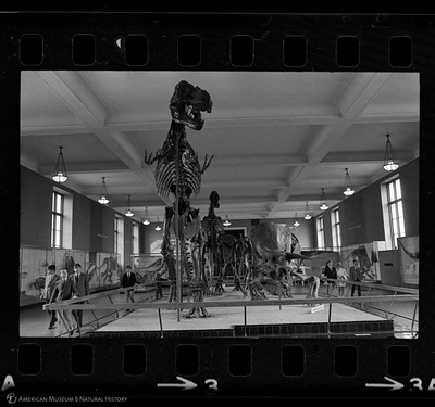 http://lbry-web-002.amnh.org/san/to_upload/35mm_halls_new/602016_03.jpg