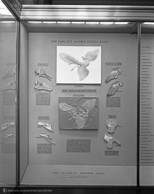 http://images.library.amnh.org/d/t/8x10/0001/00318757_l.jpg