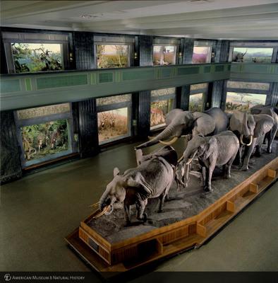 http://lbry-web-002.amnh.org/san/to_upload/photostudio/KR_elephants.jpg