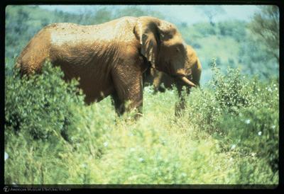 http://lbry-web-002.amnh.org/san/35mm/K14807.jpg