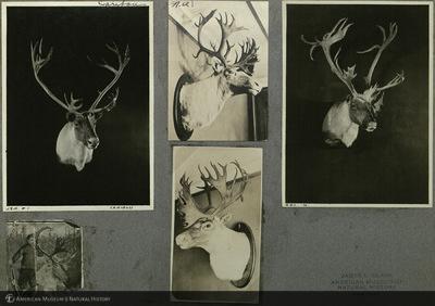 http://lbry-web-002.amnh.org/san/mo_exhibition/ppc_533_b08_f172_012.jpg