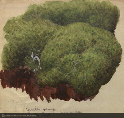 http://lbry-web-002.amnh.org/san/mo_exhibition/art002_b1_01g.jpg