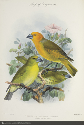 http://lbry-web-002.amnh.org/san/to_upload/extraordinarybirds/b10595077_6.jpg