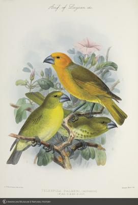 http://lbry-web-002.amnh.org/san/to_upload/extraordinarybirds/b10595077_6.jpg