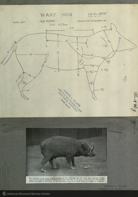 http://lbry-web-002.amnh.org/san/mo_exhibition/art001_b6_f4_04.jpg
