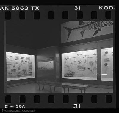 http://lbry-web-002.amnh.org/san/to_upload/35mm_halls_new/600799_31.jpg