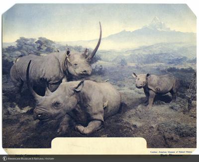 http://lbry-web-002.amnh.org/san/AMNH_postcards/100213323_55.jpg