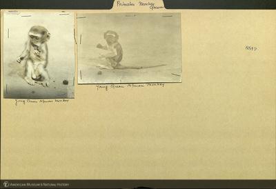 http://lbry-web-002.amnh.org/san/mo_exhibition/ppc_532_b15_f160_108.jpg