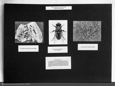 http://images.library.amnh.org/d/t/8x10/0001/00034181_l.jpg