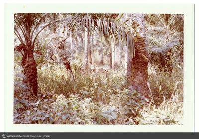 http://lbry-web-002.amnh.org/san/photoprintcollections/Arth/ppc-a78-100213278-13.jpg