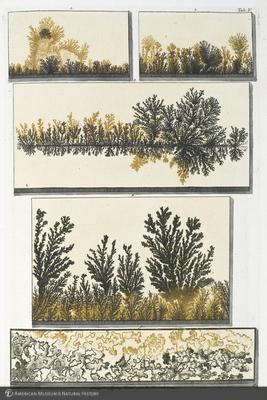 http://lbry-web-002.amnh.org/san/naturalhistories/b10533151_2.jpg