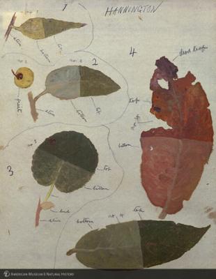 http://lbry-web-002.amnh.org/san/mo_exhibition/art002_b2_13b.jpg