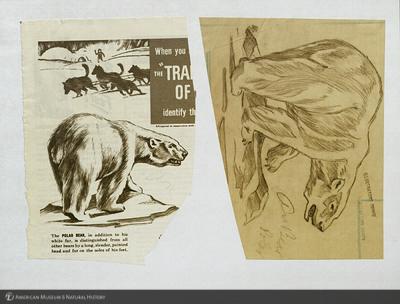 http://lbry-web-002.amnh.org/san/mo_exhibition/art001_b1_3.jpg