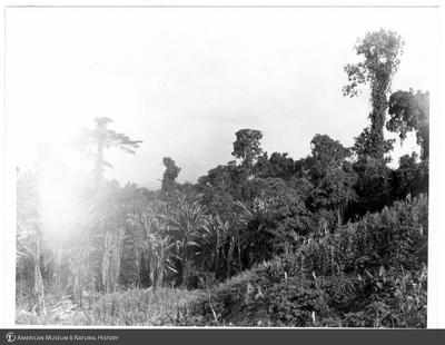 http://lbry-web-002.amnh.org/san/to_upload/Beck-PapuaNewGuinea/NG-5x7-prints/115578.jpg