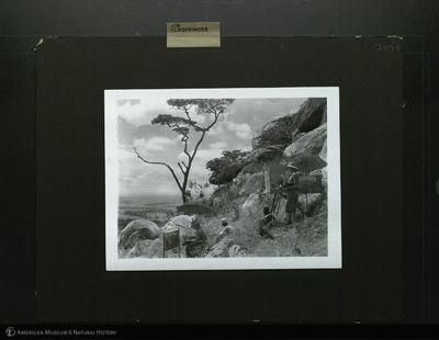 http://lbry-web-002.amnh.org/san/mo_exhibition/ppc_533_b11_f245_001.jpg