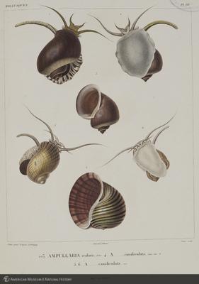http://lbry-web-002.amnh.org/san/naturalhistories/b10495770_3.jpg