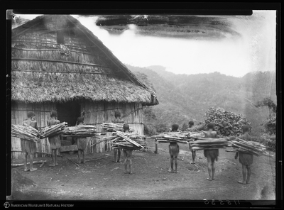 http://lbry-web-002.amnh.org/san/to_upload/Beck-PapuaNewGuinea/NG-5x7-negs/115535.jpg