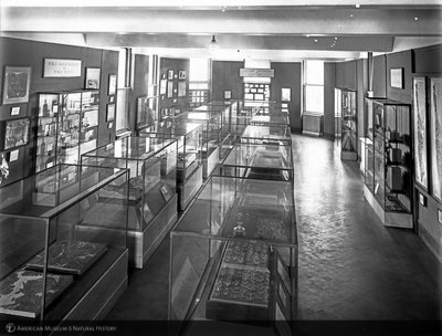 http://images.library.amnh.org/d/t/8x10/0001/00034239_l.jpg