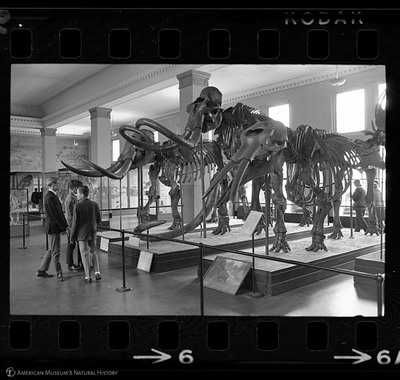 http://lbry-web-002.amnh.org/san/to_upload/35mm_halls_new/602016_06.jpg