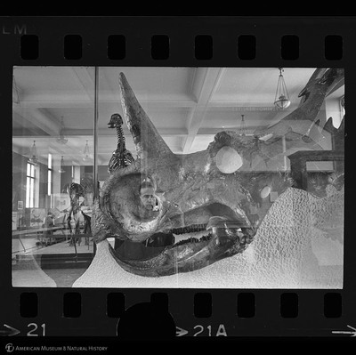 http://lbry-web-002.amnh.org/san/to_upload/35mm_halls_new/600175_21a.jpg