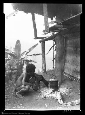 http://lbry-web-002.amnh.org/san/to_upload/Beck-PapuaNewGuinea/NG-5x7-prints/115789.jpg