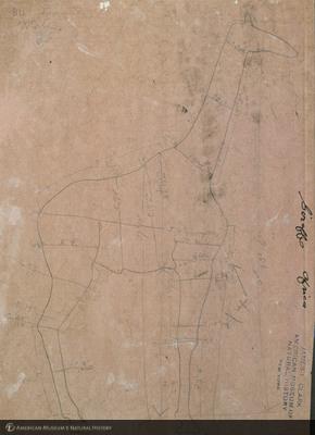 http://lbry-web-002.amnh.org/san/mo_exhibition/art001_b4_18.jpg