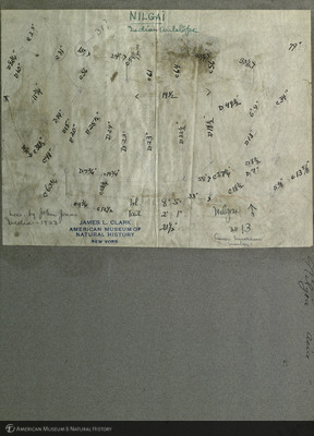 http://lbry-web-002.amnh.org/san/mo_exhibition/art001_b6_f8_02.jpg