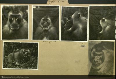 http://lbry-web-002.amnh.org/san/mo_exhibition/ppc_532_b15_f153_003.jpg