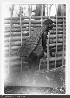 http://lbry-web-002.amnh.org/san/to_upload/Beck-PapuaNewGuinea/NG-5x7-prints/115605.jpg