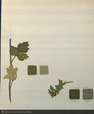 http://lbry-web-002.amnh.org/san/mo_exhibition/art003_b2_08.jpg