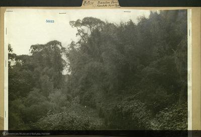 http://lbry-web-002.amnh.org/san/mo_exhibition/ppc_532_b25_f229_021.jpg