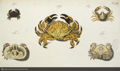 http://lbry-web-002.amnh.org/san/naturalhistories/b11448969_6.jpg