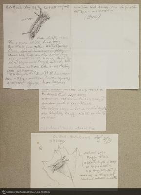http://lbry-web-002.amnh.org/san/to_upload/titianbutterflies/b1179161_16.jpg