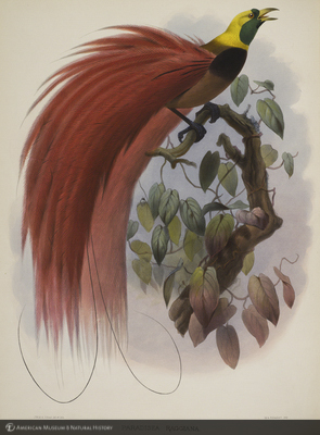http://lbry-web-002.amnh.org/san/naturalhistories/b10610169_7.jpg