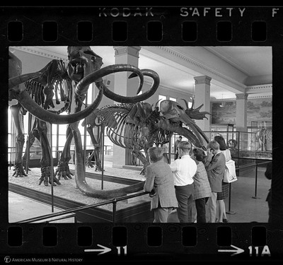 http://lbry-web-002.amnh.org/san/to_upload/35mm_halls_new/602016_11.jpg