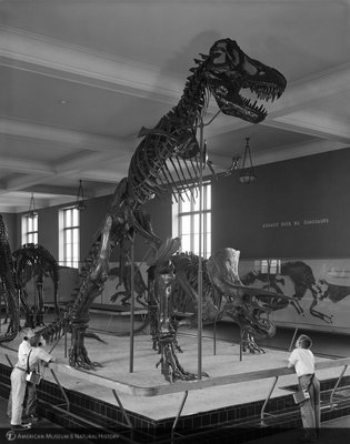 http://images.library.amnh.org/d/t/8x10/0002/00327562_l.jpg